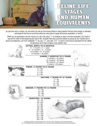 Life Stages of Cats and Human Equivalents