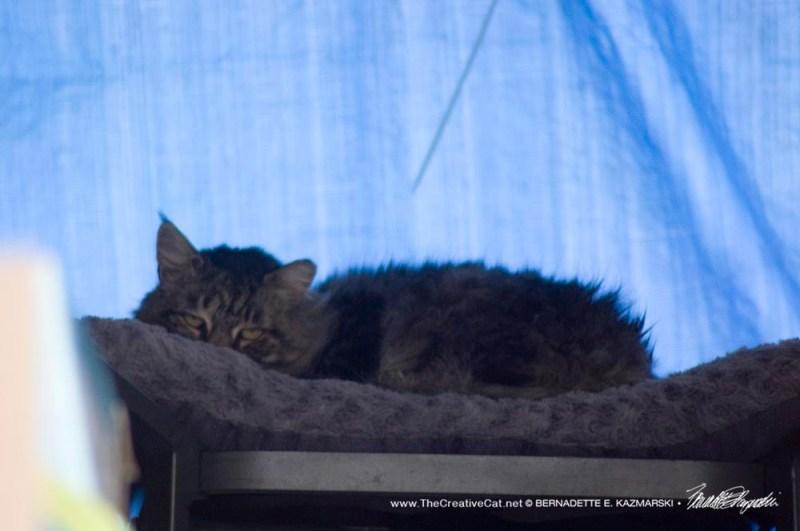 feral cat inside porch