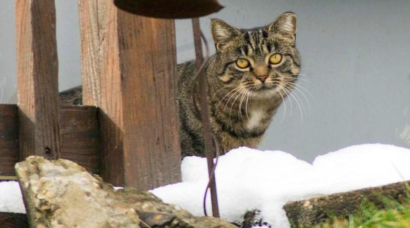 ear-tipped cat