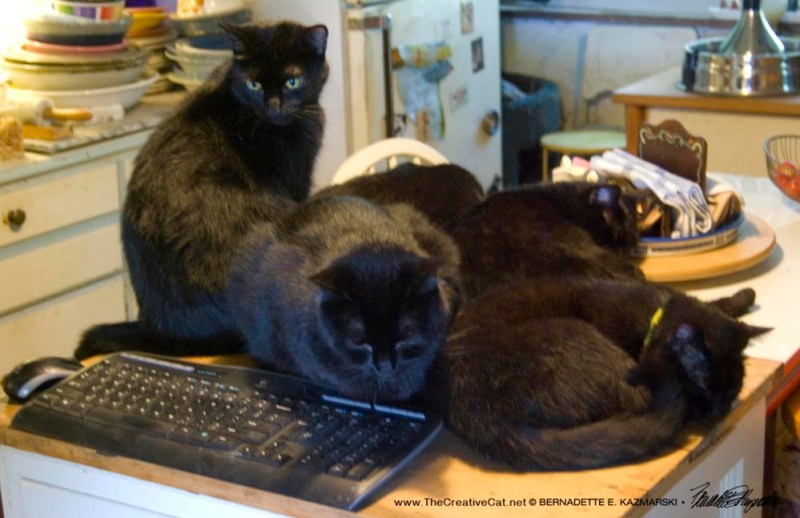 All Five gather around as I write this morning.