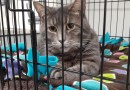 Cats for Adoption: Max, Binx and Phoebe at Fix 'Ur Cat