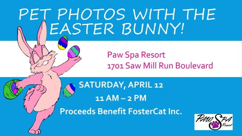 Pet photos with the Easter Bunny! fostercat