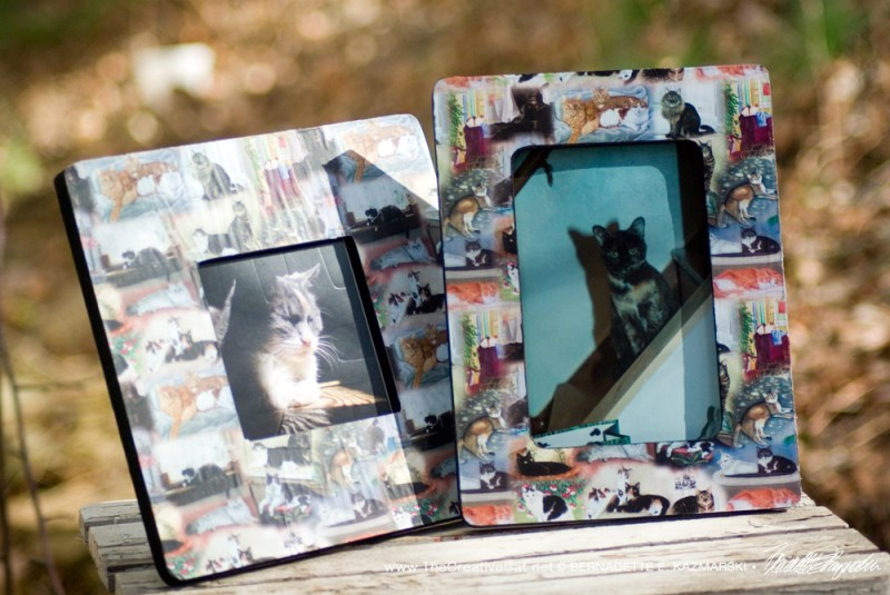 """22 Cats"" photo frames."