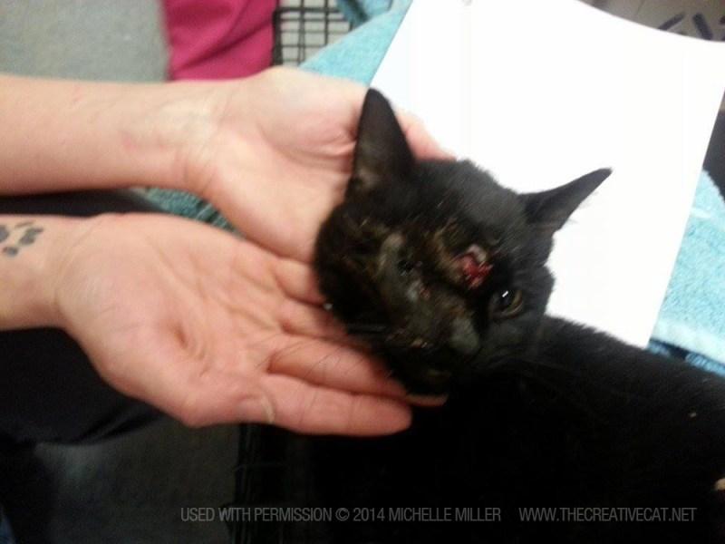 black cat with injuries Frankencat