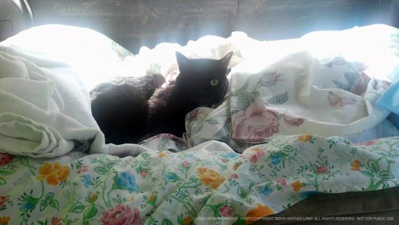one-eyed black cat on sheet