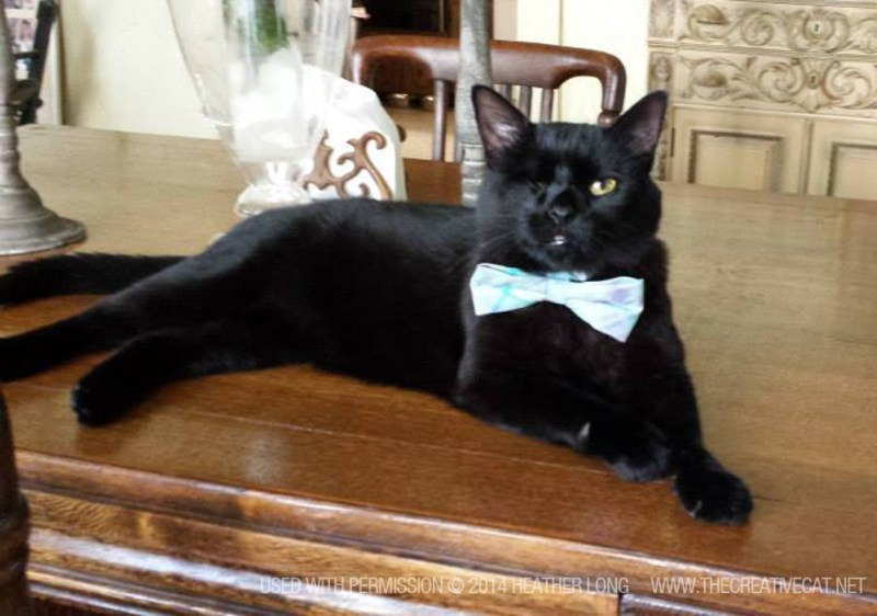 one-eyed black cat with bowtie