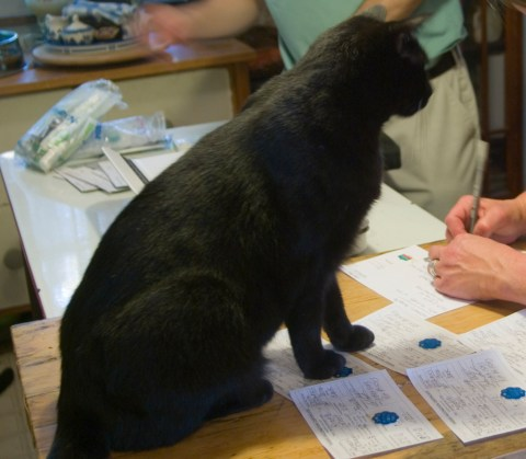 Giuseppe supervises my veterinarian finishing the rabies certificates with their tags after our whole-house exam.