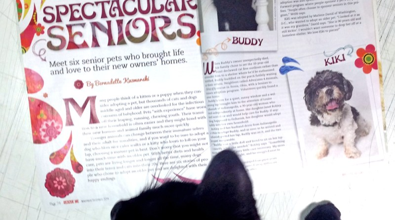 black cat with magazine article