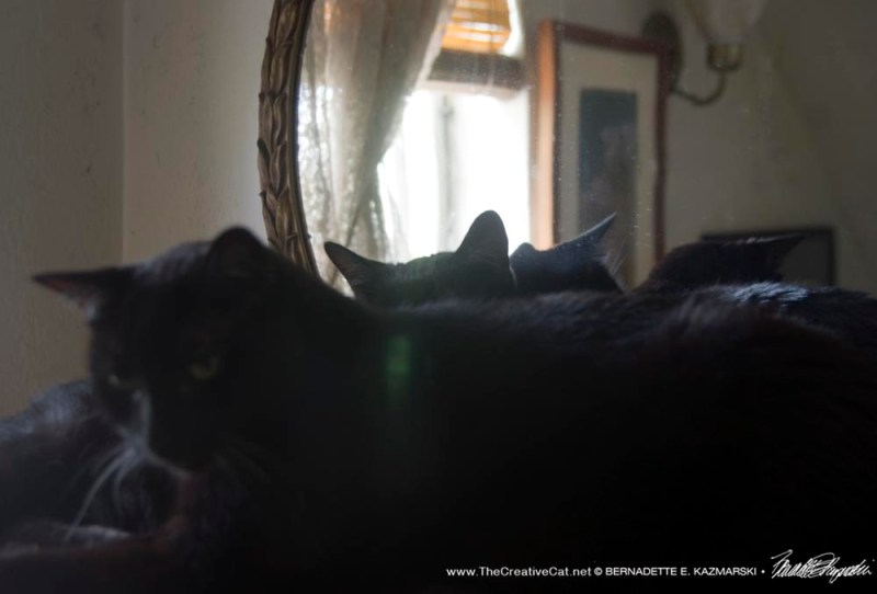 two black cats by mirror