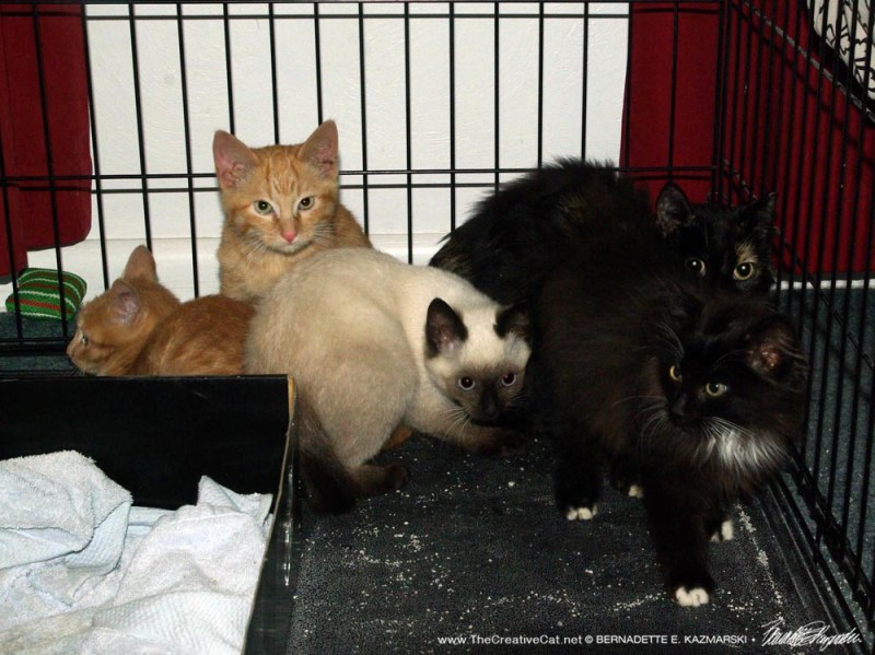 cat and kittens in cage