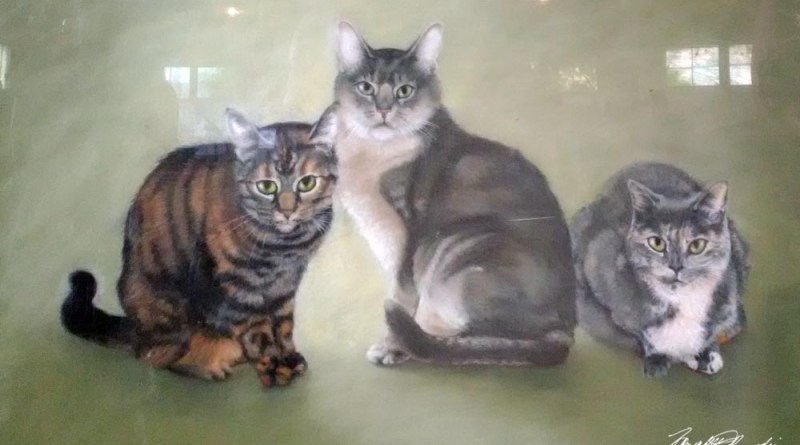 Tigger, Simba and Tribecca, the sample portrait cats.