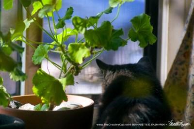 black cat under plant