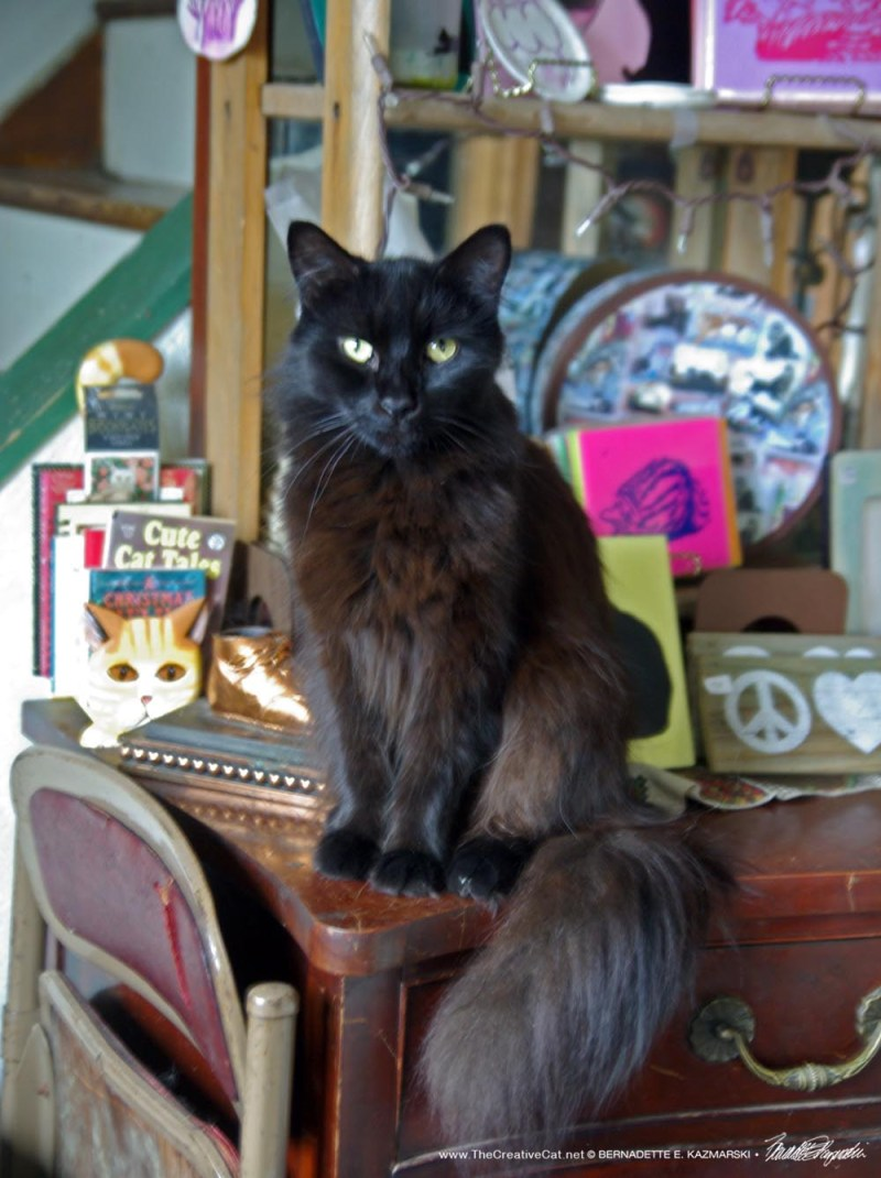 Hamlet welcomes you to Black Cat Friday