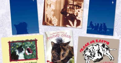 Marketplace: Save on Boxed Dozen Holiday Cards