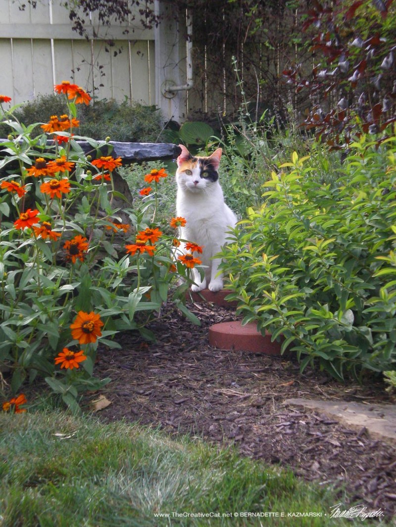 Reference for the overall garden scene, but the wrong kitty.