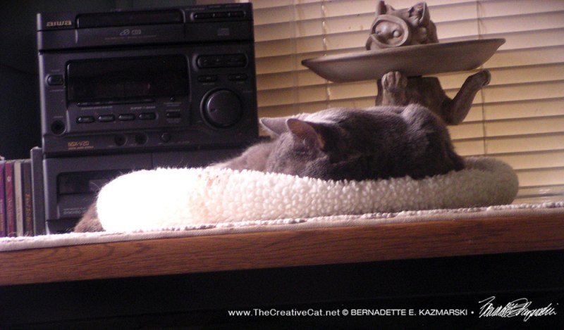 gray cat sleeping