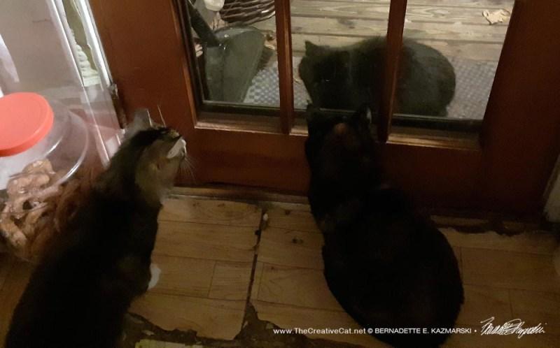 cat at door
