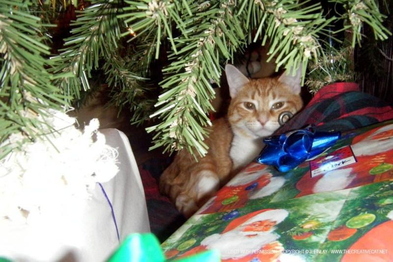 Jack at Christmas.