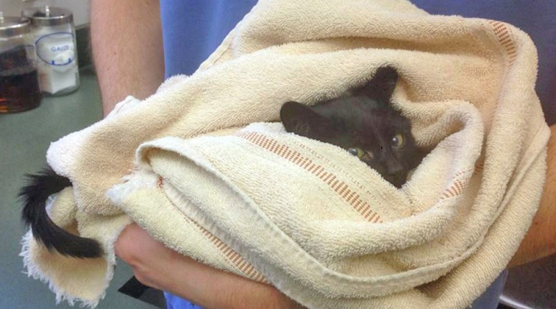 black kitten in towel