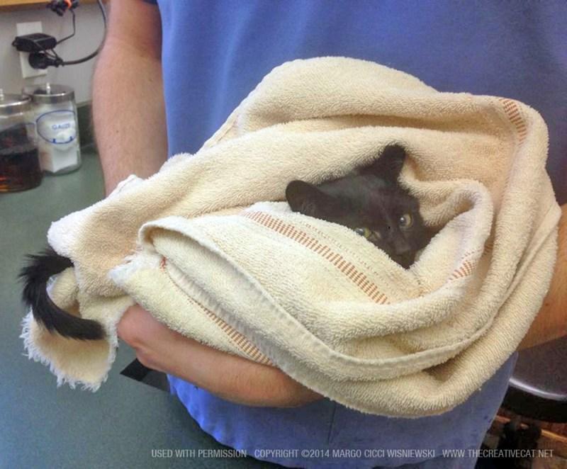 black kitten in towel
