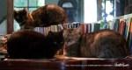 three cats library
