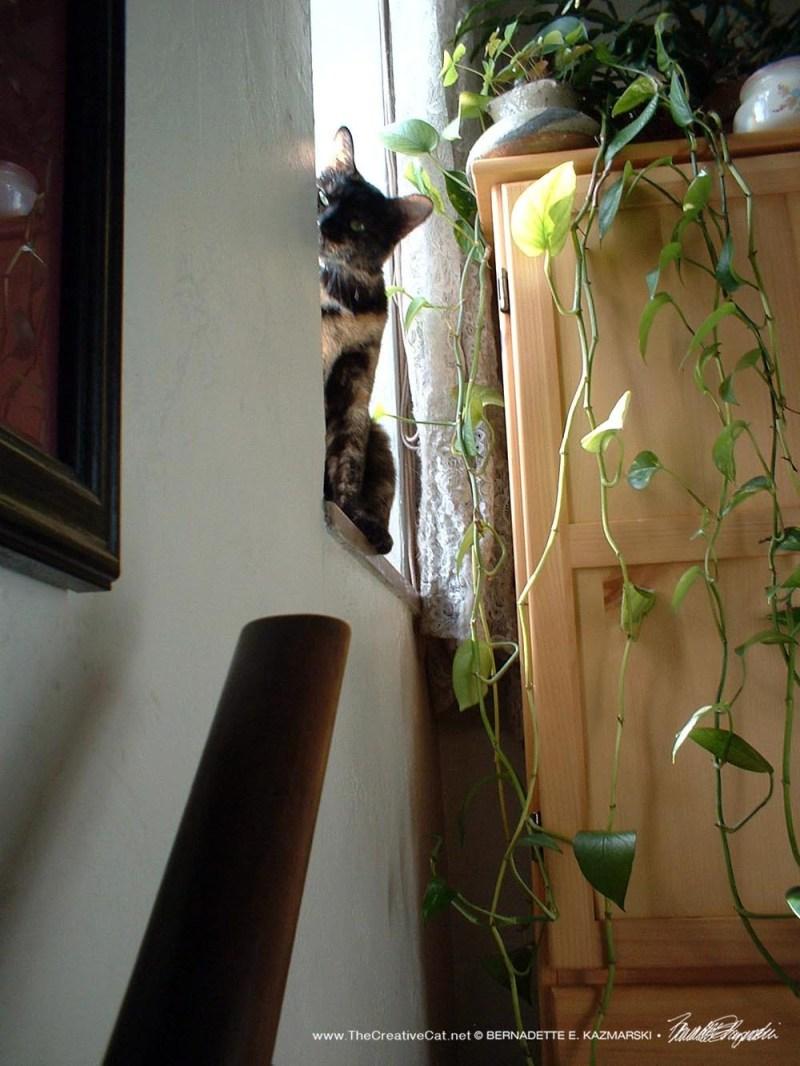 tortoiseshell cat on windowsill