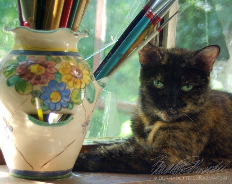 Kelly the Studio Cat-closeup