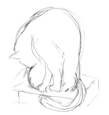 pencil sketch of cat on books