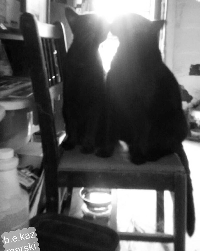 Kissing Kitties