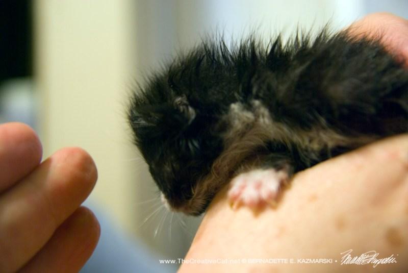Kitten in hand.