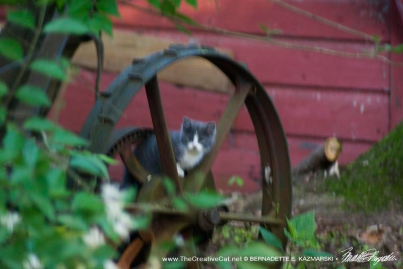 The gray and white kitten was all about exploring!