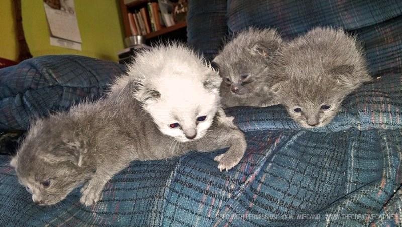 The litter of abandoned kittens.