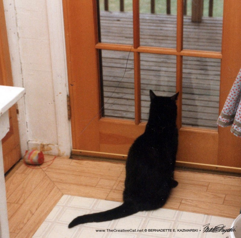 black cat at door