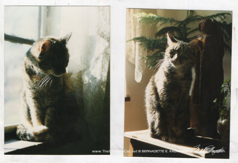 Two photos of Fawn, I've always intended to paint the one on the left.