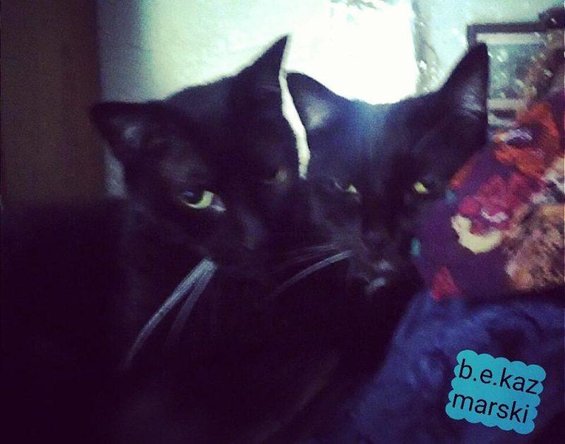 Laundry cats.