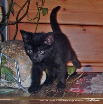 black cat on rug