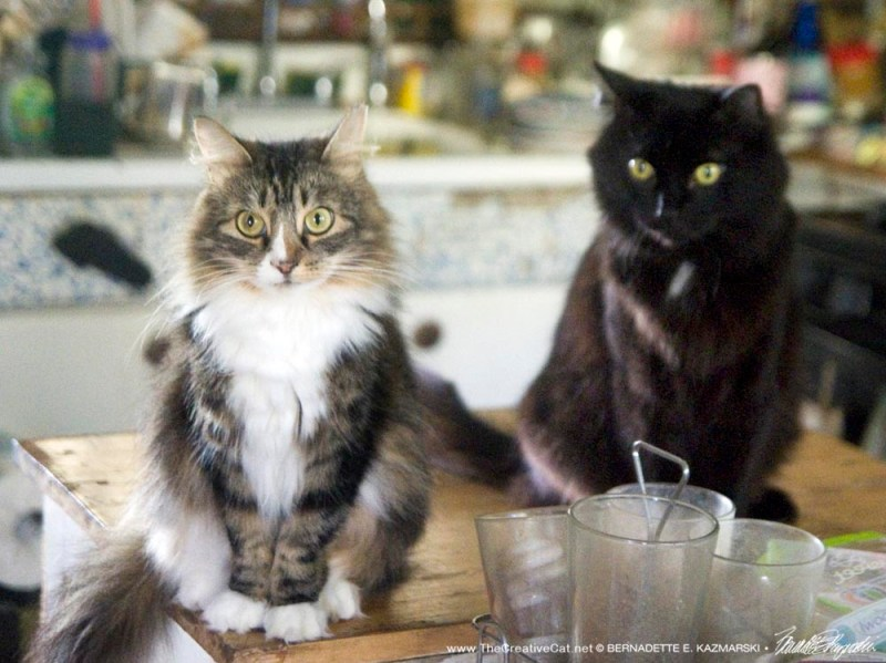 two cats in kitchen