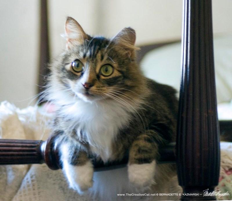 cat on bedrail