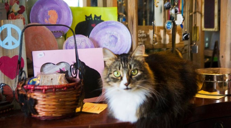 tabby and white cat in display