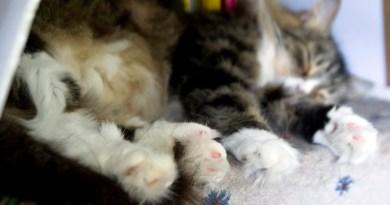 Mariposa's mittens