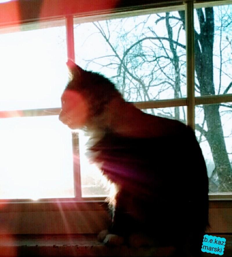 Mariposa enjoys the sunrise.
