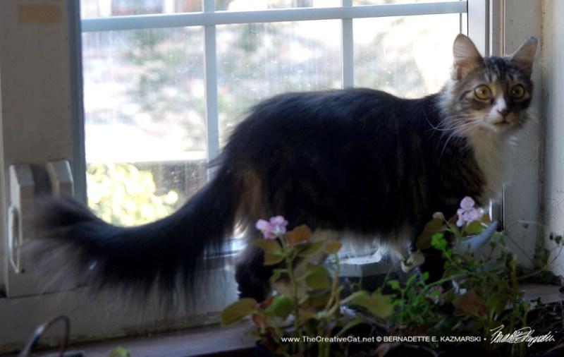 Mariposa with begonias.