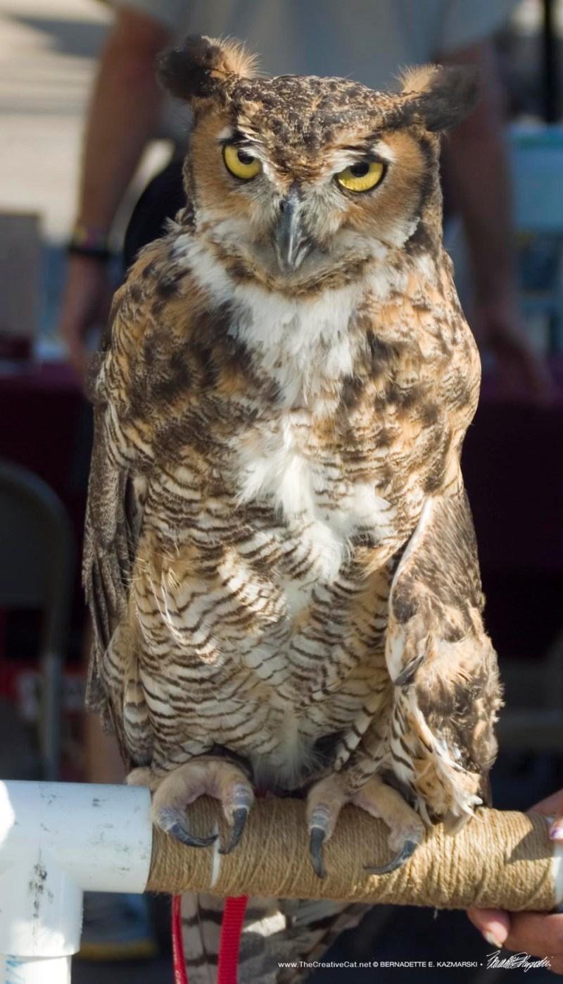 Martha the demonstration owl.