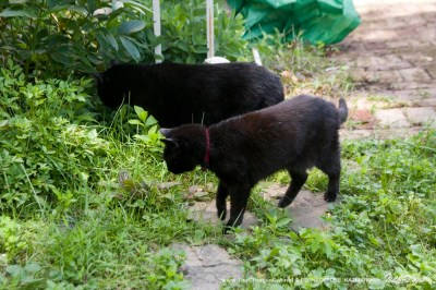 mimi and mewsette two black cats