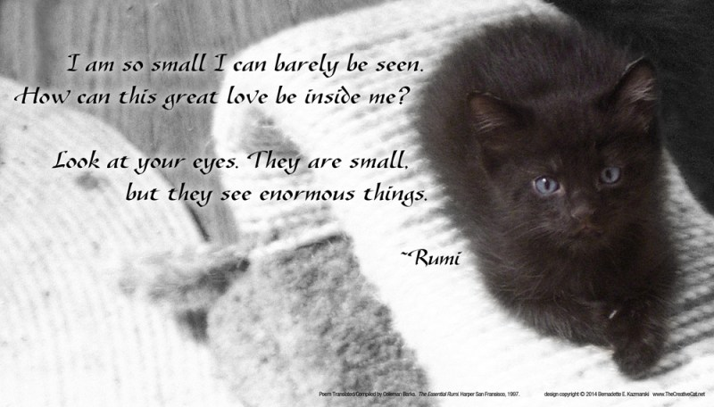 black kitten with rumi quote