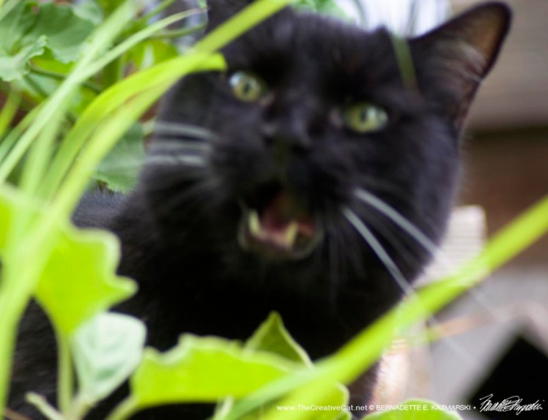 black cat with foliage