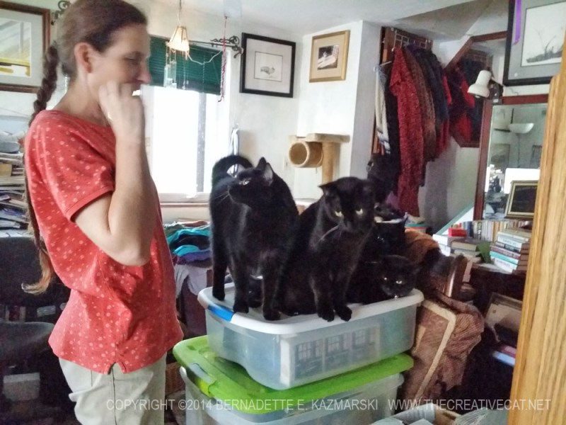 four black cats and woman