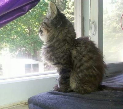 Mickey as an older kitten, at one pound.