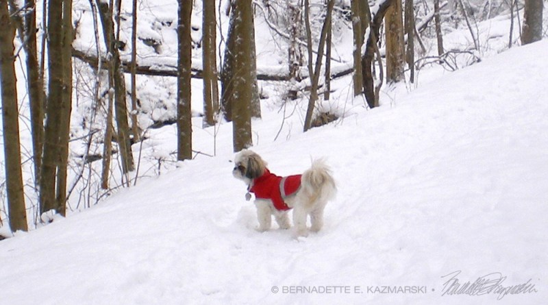 little dog in snow