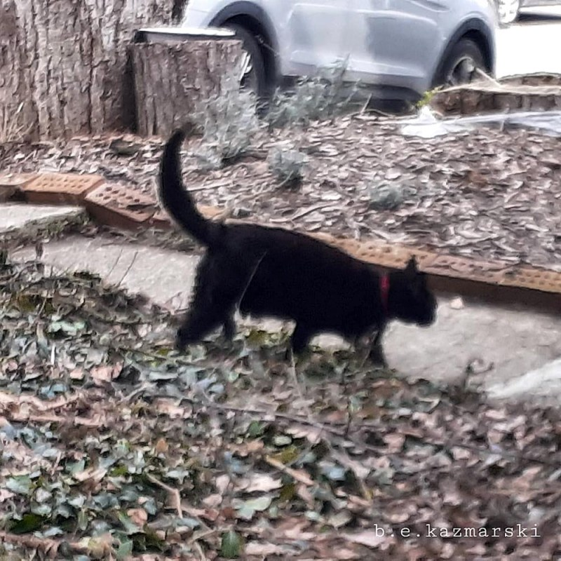 black cats in yard